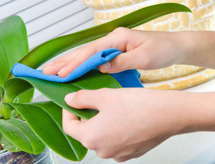 hand  cleaning  plant by wet sponge