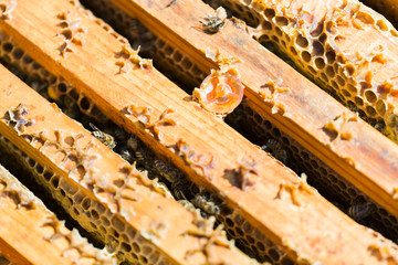 Wooden Honeycomb Frames With Bees