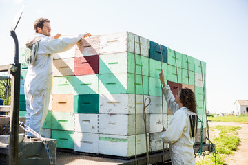 Beekeepers Loading Honeycomb Crates In Truck