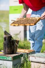 Beekeeper Smoking A Beehive
