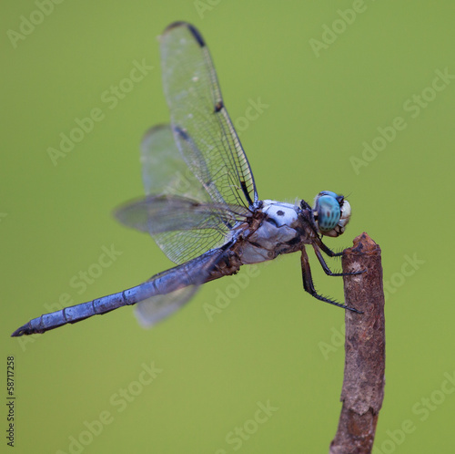 Dragonfly Profile