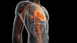Постер, плакат: human vascular system