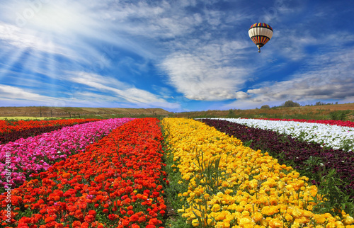 Foto op Aluminium Ballon The rural fields with flowers