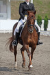 Horse dressage competition