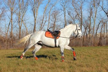 Runs away horse