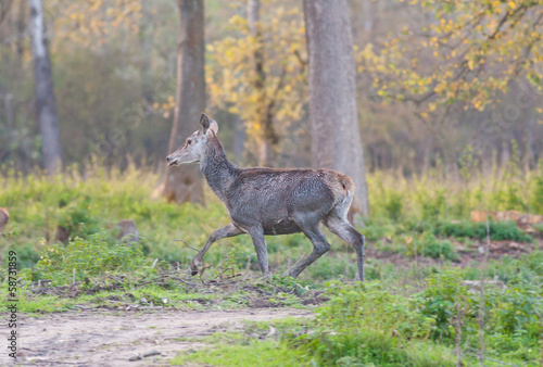 Hind walking in forest