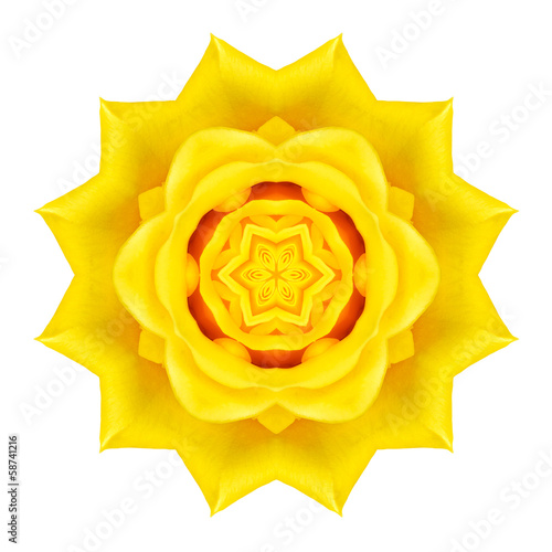 Yellow Concentric Rose Flower Isolated on White. Mandala