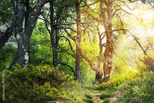zaczarowany-las