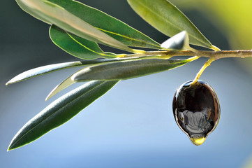 Fresh olive and oil drop closeup