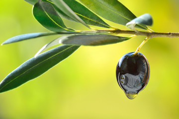 Olive with oil drop closeup, concept of fresh olive oil