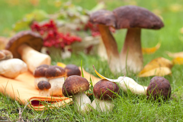 Forest ceps on a green grass