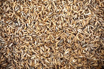 Thai rice seed background.