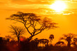 Orange glow of an african sunset - 58759635