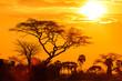 Orange glow of an african sunset - 58759635