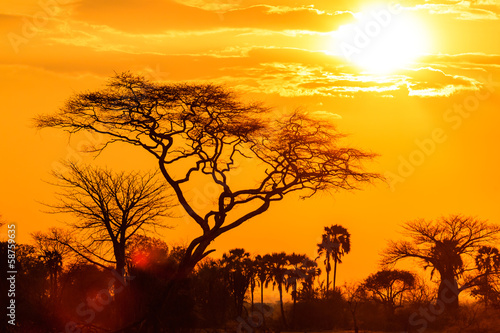 Foto op Canvas Baobab Orange glow of an african sunset