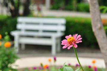 White bench in public garden zinnia foreground.