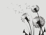 Dandelion Silhouette - 58765254