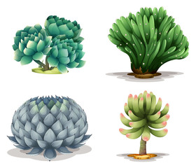Different cacti