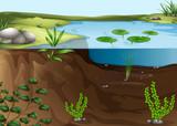 A pond ecosystem poster