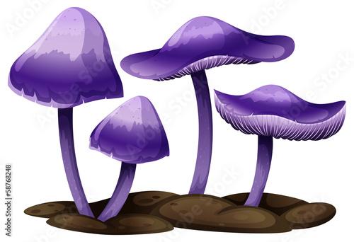 Purple mushrooms