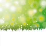 Easter Card Background White Grass