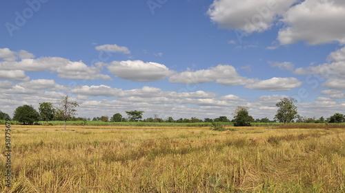 Time lapse of rice farm with blue sky in local country of tha