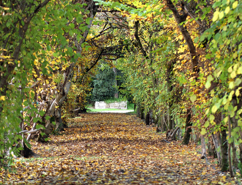 tunnel of leaves with a small road to infinity in November