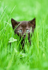 Adorable black kitten sitting in the grass