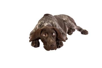 щенок в печали