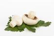 White mushrooms on white background