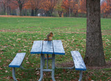 Squirrel eating a piece of bread on picnic table in a fall day