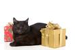 Katze mit Weihnachtsgeschenken