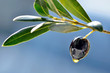 Branch with black olive and olive oil drop, food background