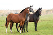 Group of three horses on pasture in autumn