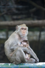 cute monkey with baby