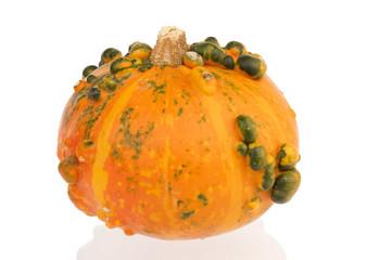 Orange pumpkin with green bulbs