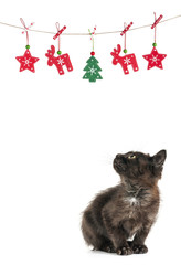 kitty cat christmas