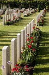 Spring at Anzio  war cemetery.