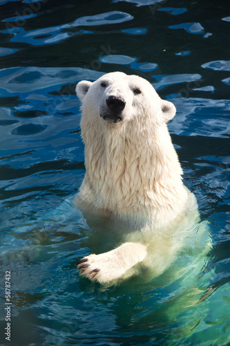 Foto op Canvas Ijsbeer Polar bear