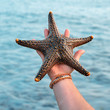 sea star on hand
