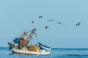 flock of birds and fishing boat in the peruvian coast at Piura P
