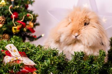 Weihnachten Teddyzwergwidder