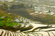 Rice terraces. Yunnan, China.