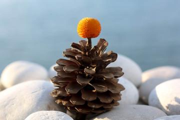 Pine Cone on Pebbles