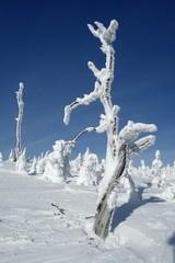 Frosted Tree Stump
