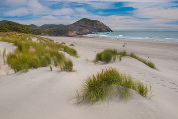 Dune vegetation Wharariki Beach