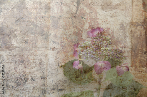 grunge hydrangea flower with buds and leaves
