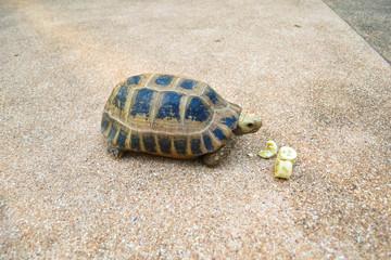 Turtle on the floor