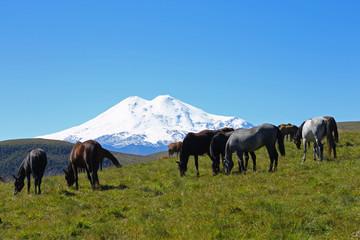 Horses on the summer autumn caucasus meadow