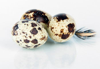 Quail eggs isolated on white